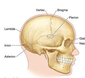 head  neck human anatomy   dolittle