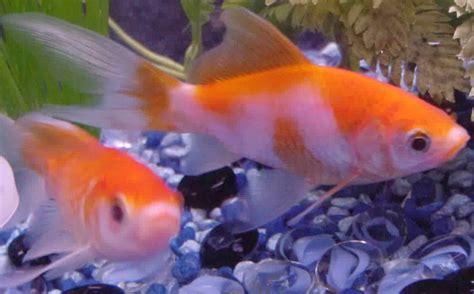 sor asmak mlon  colorful fish