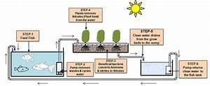 Flow Diagrammatic Representation Of Aquaponics System In
