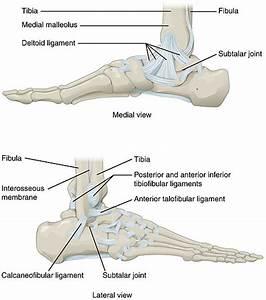 What U0026 39 S An Ankle Sprain