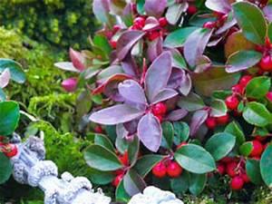Plantes D Hiver Extérieur Balcon : les fleurs et plantes d 39 hiver pour jardini re ~ Nature-et-papiers.com Idées de Décoration