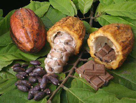 %name Organic Kona Coffee   Light Roast Pure Kona Coffee Whole Bean or Ground