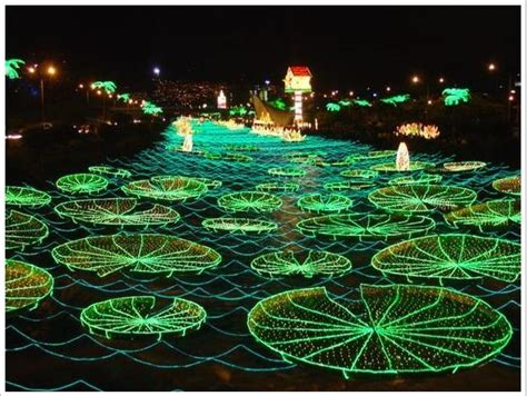 christmas lights in columbia lights pinterest