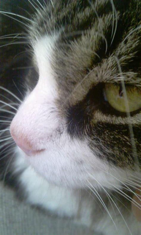 nose cat cold memes wet