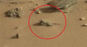 Was A Frog Spotted On Mars By NASA's Curiosity Craft?