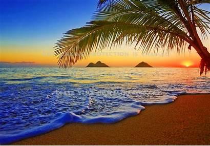 Waves Sunrise Ocean Palms Hawaii Sea Sands