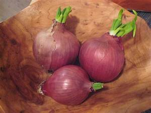 Anktangle: Growing Sprouted Onions