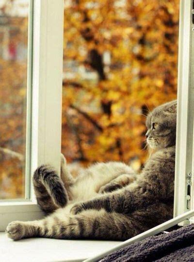 wochenende lustige tiere katzen bilder katzen und