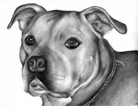 Pitbull Pencil Drawings