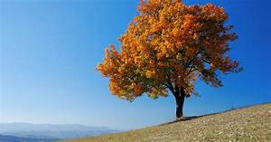 Best fall colored trees to plant now prescott living