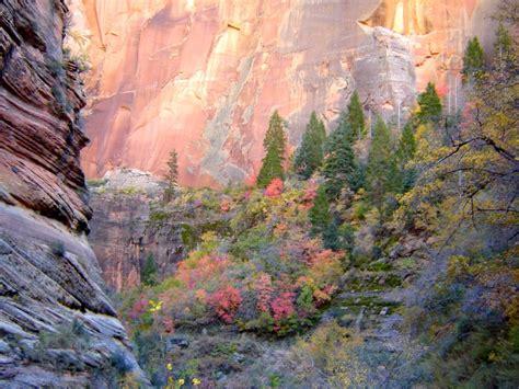 fall foliage  zion national park utah  travel