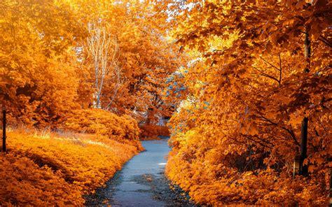 Download wallpaper 2560x1600 autumn, path, park, foliage ...