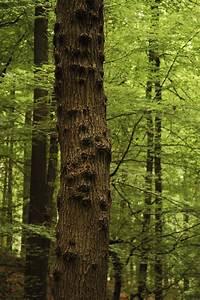 Comment Creuser Un Tronc D Arbre : tronc botanique wikip dia ~ Melissatoandfro.com Idées de Décoration