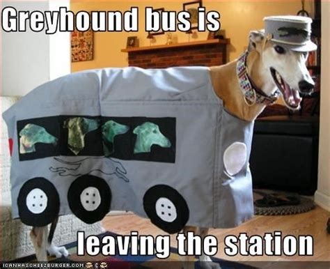 75 Best Images About Greyhound Memes And Funny Greyhound