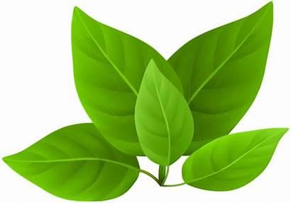 Leaves Clip Transparent Leaf Clipart Spring Tree