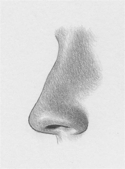 images  body parts noses  pinterest gray