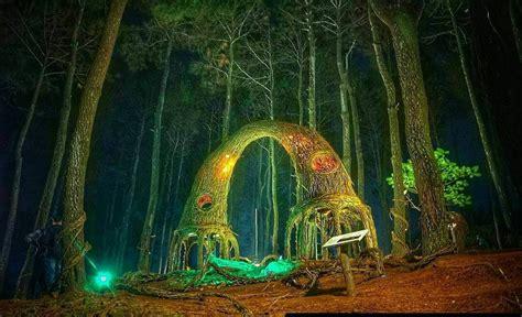 hutan pinus pengger tempat wisata  jogja tempat wisata
