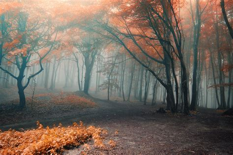 Fall Backgrounds Spooky by Daily Deal A Real Sleepy Hollow Hotel