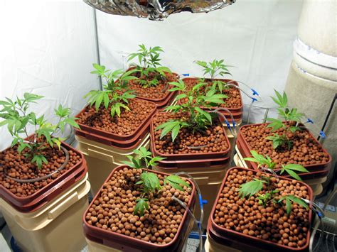 Soil Or Soilless For The Beginner Marijuana Grower