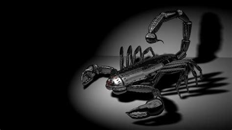 black scorpion hd wallpaper  gallsourcecom tattoo