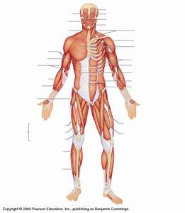 Gentry  Teresa M    Anatomy Diagrams
