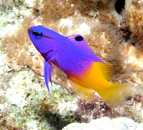 saltwater fish salt water fish aquarium fish exotic fish