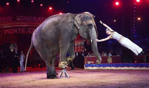 wild circus animals face total ban   years uk