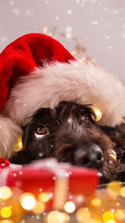 Christmas Animals 4k Snow Dog Wallpapers Holidays