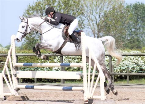 horses performance horse sport future eighteen showjumper stud sold prospect equestrian young stableexpress well showjumpers mare highoffleystud