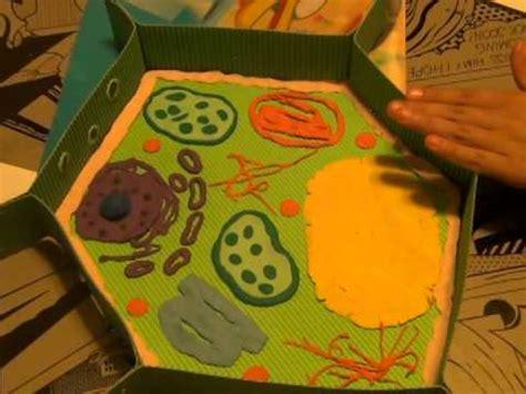 download video como hacer c 233 lula vegetal maqueta mp4 streaming