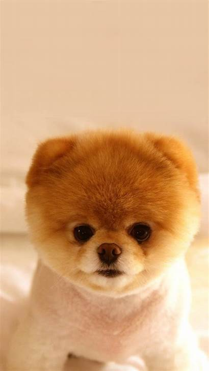 Puppy Dog Cutest Phone Wallpapers Mobile Iphone
