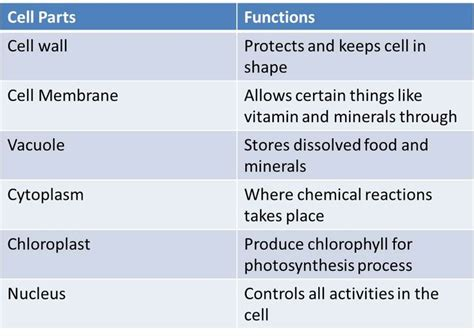 human cell parts  functions google search science