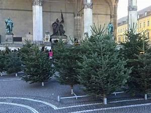 Schrebergarten München Kaufen : weihnachtsbaum kaufen m nchen my blog ~ Whattoseeinmadrid.com Haus und Dekorationen