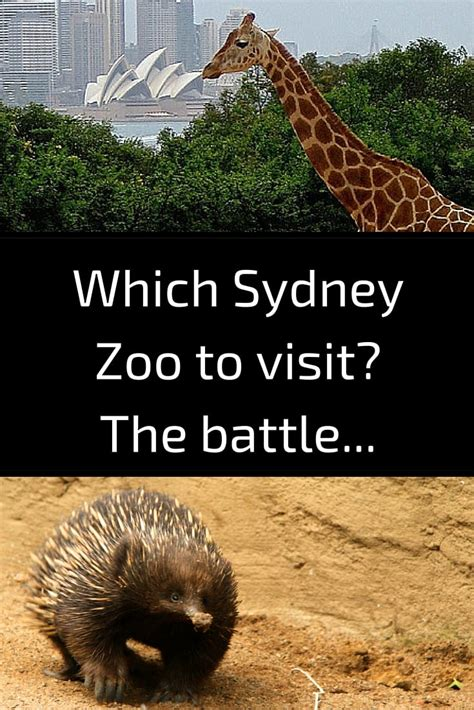 zoo wildlife taronga featherdale sydney park which australia visit zigzagonearth western