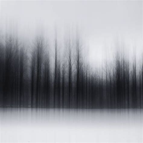 blurry forest photography photography ideas forest
