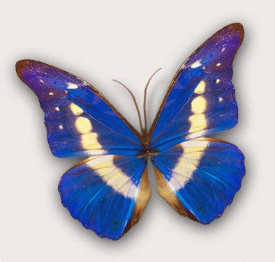 Animated Butterfly Wallpaper Gif - butterfly wallpaper hd animated butterfly wallpaper
