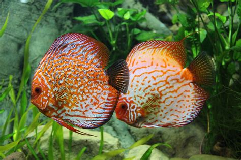 Best Fish Names Ideas And Images On Bing Find What You Ll Love