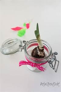Blumenzwiebeln Im Glas : fr hbl her im glas dekorieren detail ~ Markanthonyermac.com Haus und Dekorationen