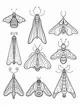 Coloring Pages Moth Insect Adult Printable Bug Animal Insects Print Sheets Wiring Vector Birthday Diagram Books Boat Happy Beetle Colouring sketch template