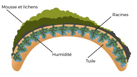 Hydrofuge Tuiles by Hydrofuge Toiture Global Habitat