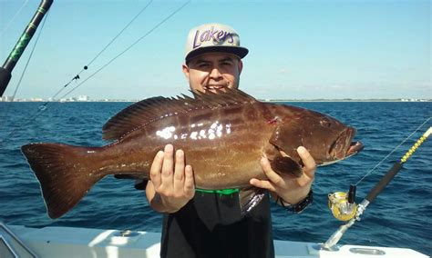 deep fishing sea lauderdale fort grouper holding guy dropping caught ft nice fishheadquarters
