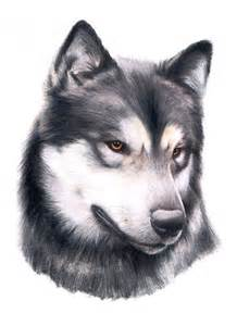 Realistic Animal Drawings Dogs
