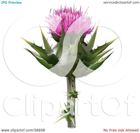 Clipart Illustration Of A Milk Thistle Blessed Milk