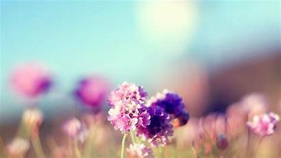 Nature Mac Wallpapers Sunny Flowers Field Pink