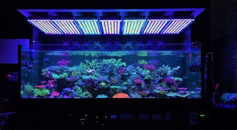led reef lighting amazing japanese reef tank atlantik v4 led lighting