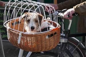 Panier Pour Petit Chien : panier v lo pour chien mod les prix pr cautions ooreka ~ Teatrodelosmanantiales.com Idées de Décoration