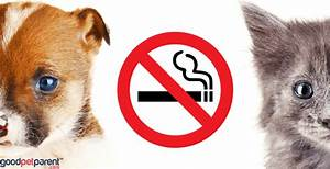 Second-Hand Smoke And Pets - Good Pet Parent  Environmental Tobacco Smoke Secondhand Smoke