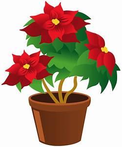 Poinsettia_Pot_PNG_Clipart | ° my garden valley ...