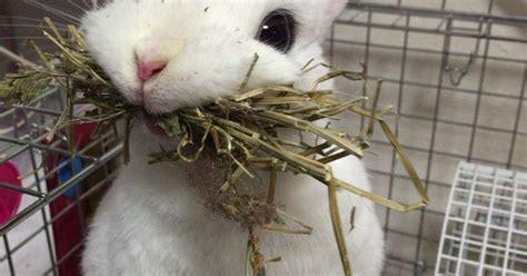 derpy bunny  bunnies pinterest mom  bunny