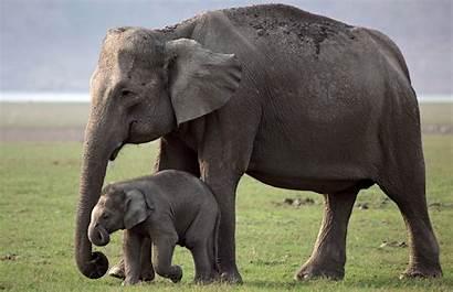 Elephant 4k Mother Child Elephants Cutest Wallpapers